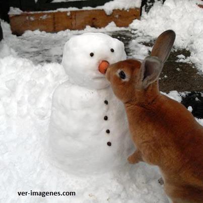 Conejo muy listo