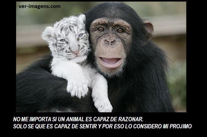 No me importa si un animal ......