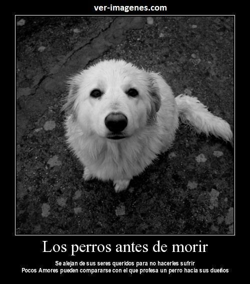 Los perros antes de morir......