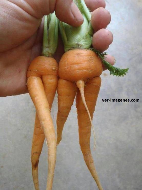 Pareja de zanahorias