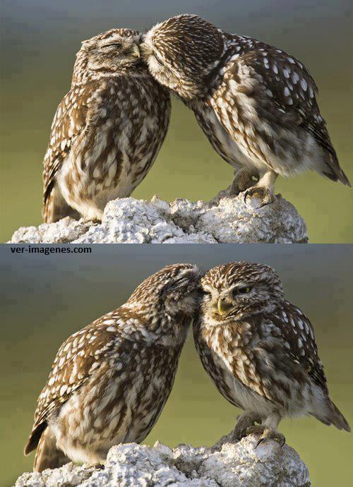Amor entre Aves