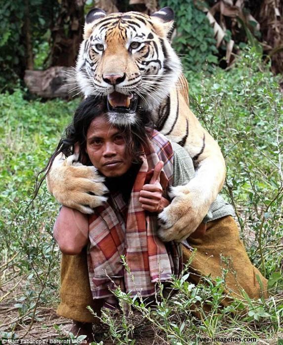 Amistad entre un Tigre y un Hombre