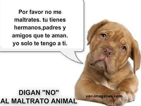 Imagen Por Favor No Me Maltrates. Digan