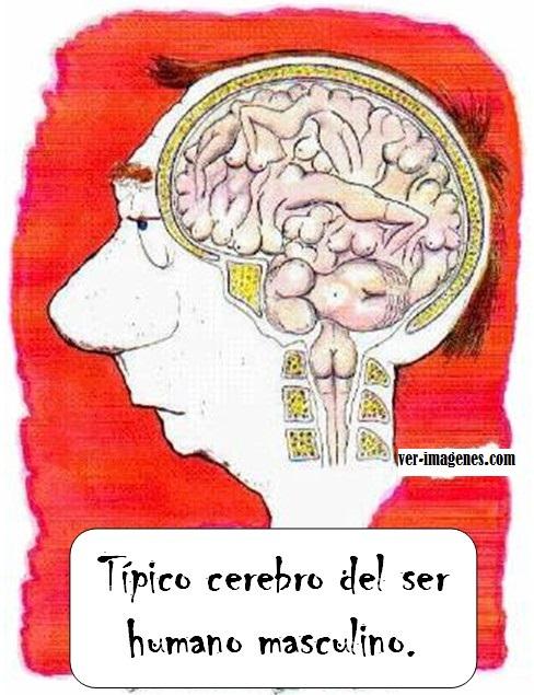 Cerebro masculino