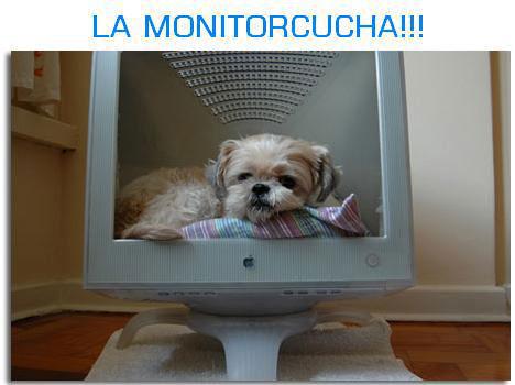 La monitorcucha