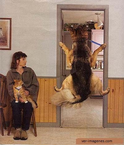 Imagen Fobia al veterinario