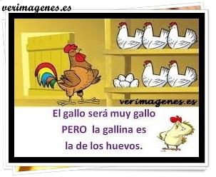El gallo será muy gallo