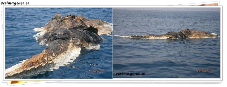Encontrada grande y extraña criatura marina en el golfo pérsico