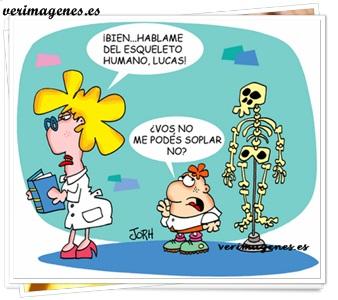 Hablame del esqueleto humano