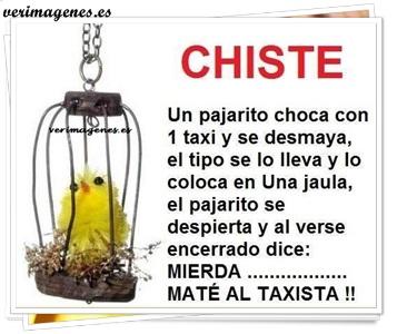 Imagen Pajarito enjaulado
