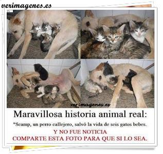 Maravillosa historia animal real