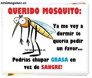Querido mosquito: