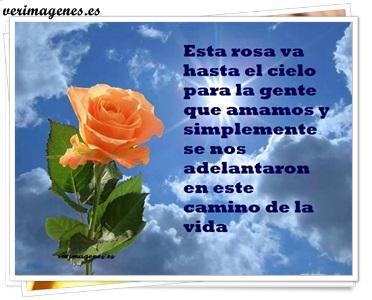 Esta rosa va hasta el cielo