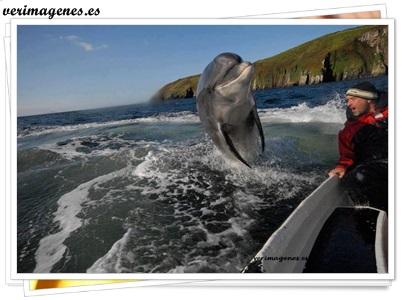 Saludo del delfín