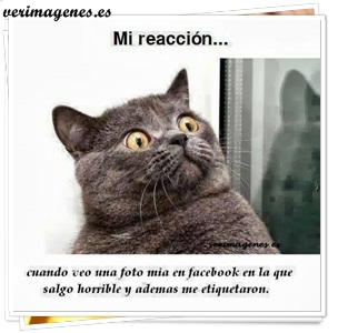 Mi reacción