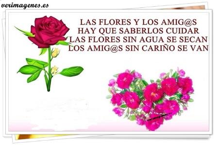 Las flores y los amig@s