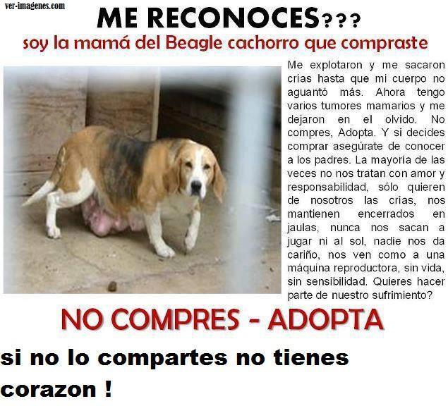 No compres, adopta