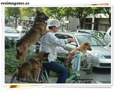 Paseando las mascotas por la ciudad