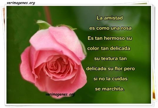 Imagen La amistad es como una rosa