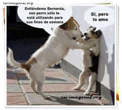 Entiéndeme Bernarda, ese perro solo te está utilizando