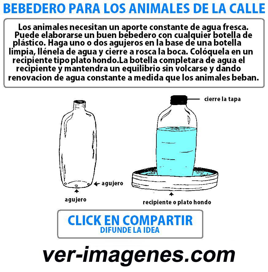 Imagen Bebedero Para Los Animales De La Calle