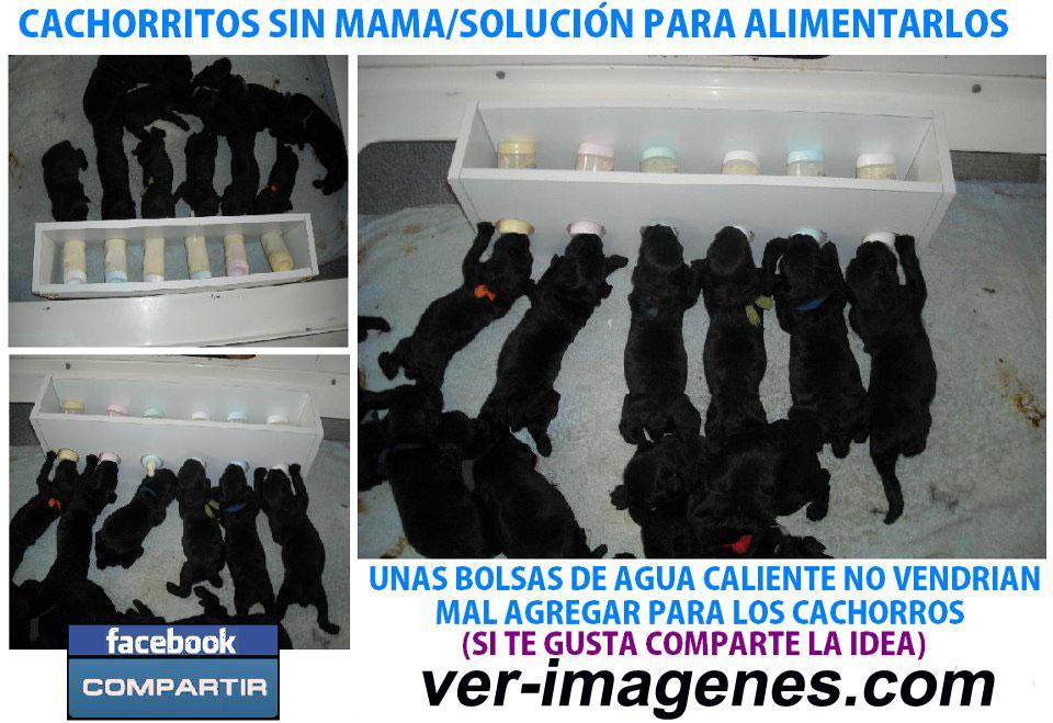 Imagen Cachorritos sin mama solucion para alimentarlos