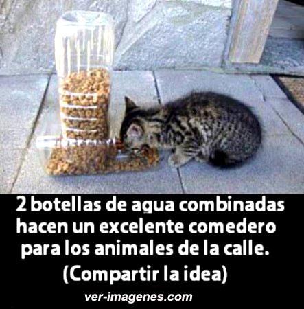 Imagen Crear un comedero con 2 botellas