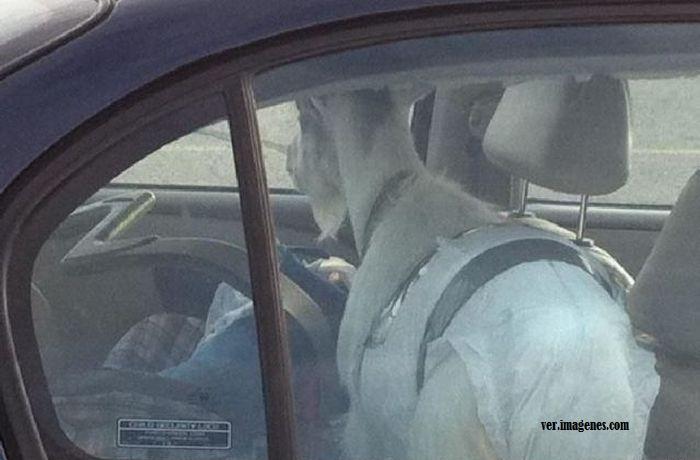Imagen Cabra dentro del coche
