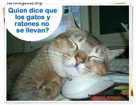 Quién dice que los gatos y ratones