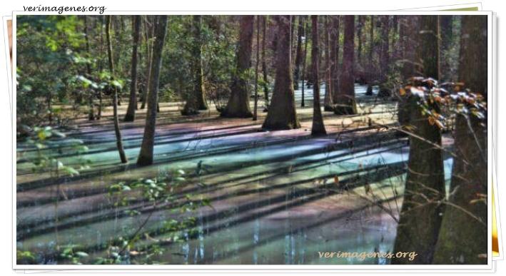 Pantano con los colores del aircoiris en Florida