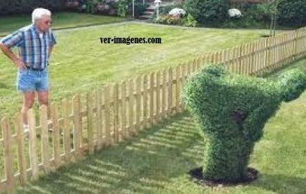 Sorpresa del vecino
