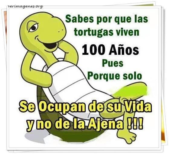 Sabes porque las tortugas viven 100 años