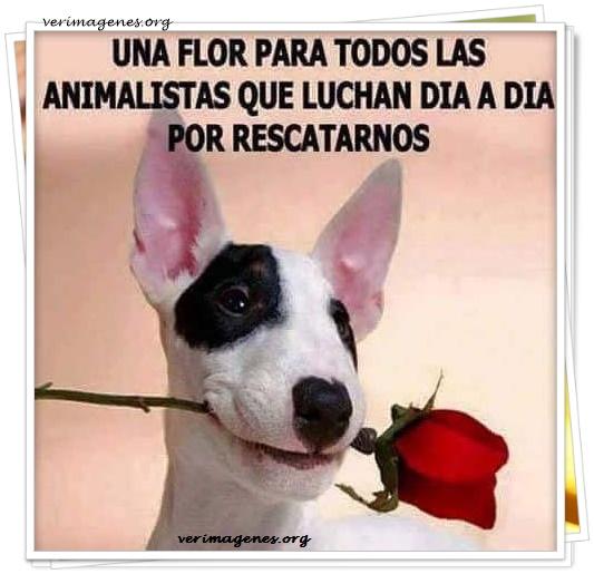 Una flor para todos las animalistas