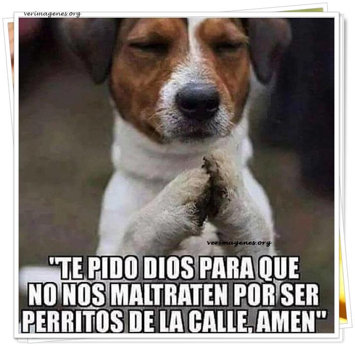 Te pido dios