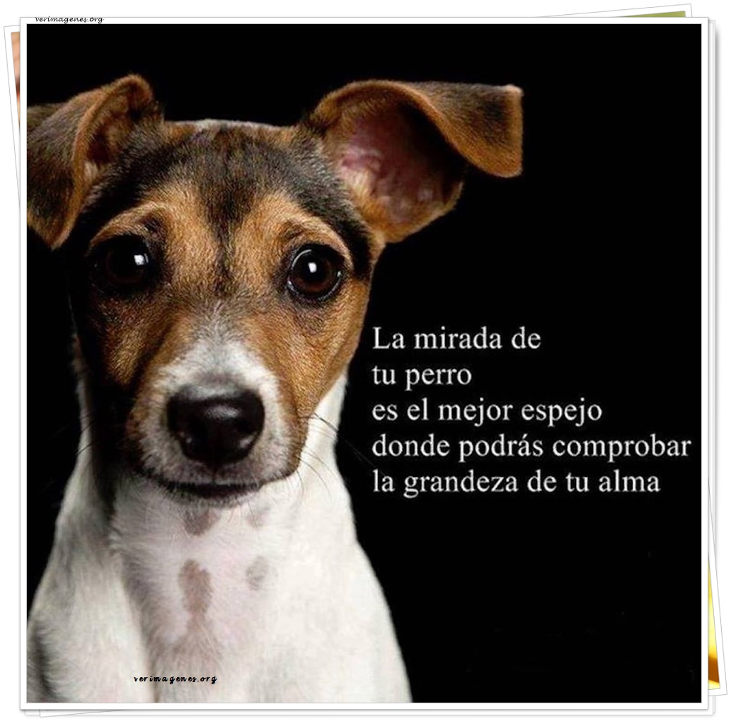 La mirada del perro