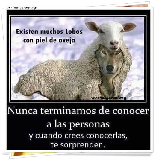 Existen muchos lobos con piel de oveja