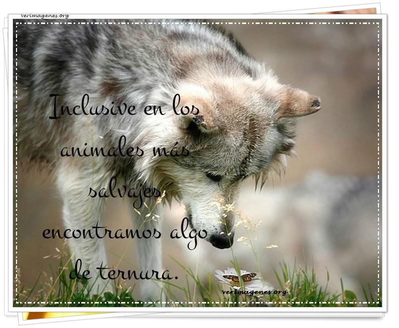 Incluso en los animales más salvajes