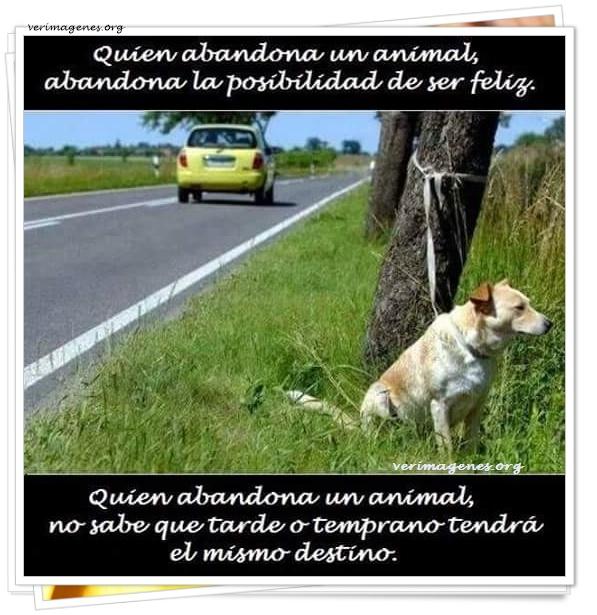 Quien abandona un animal