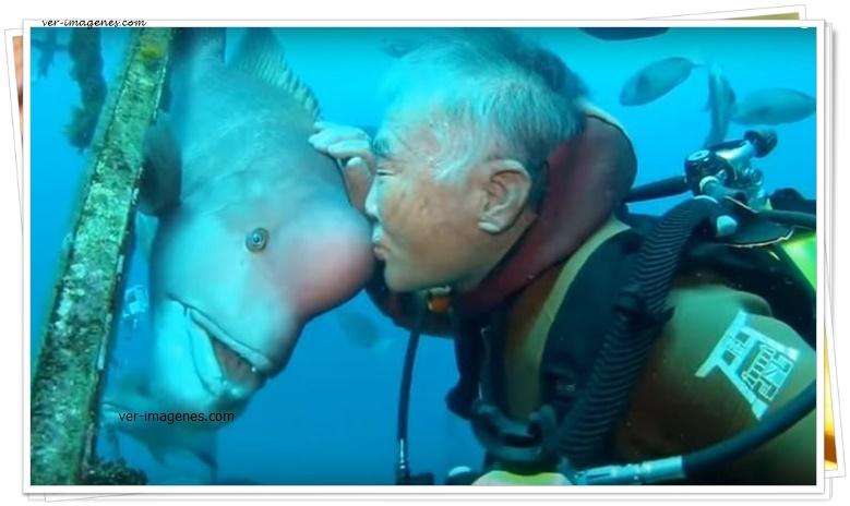 Un anciano japonés lleva más de 30 años visitando a este pez