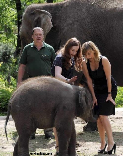 Elefante fisgon